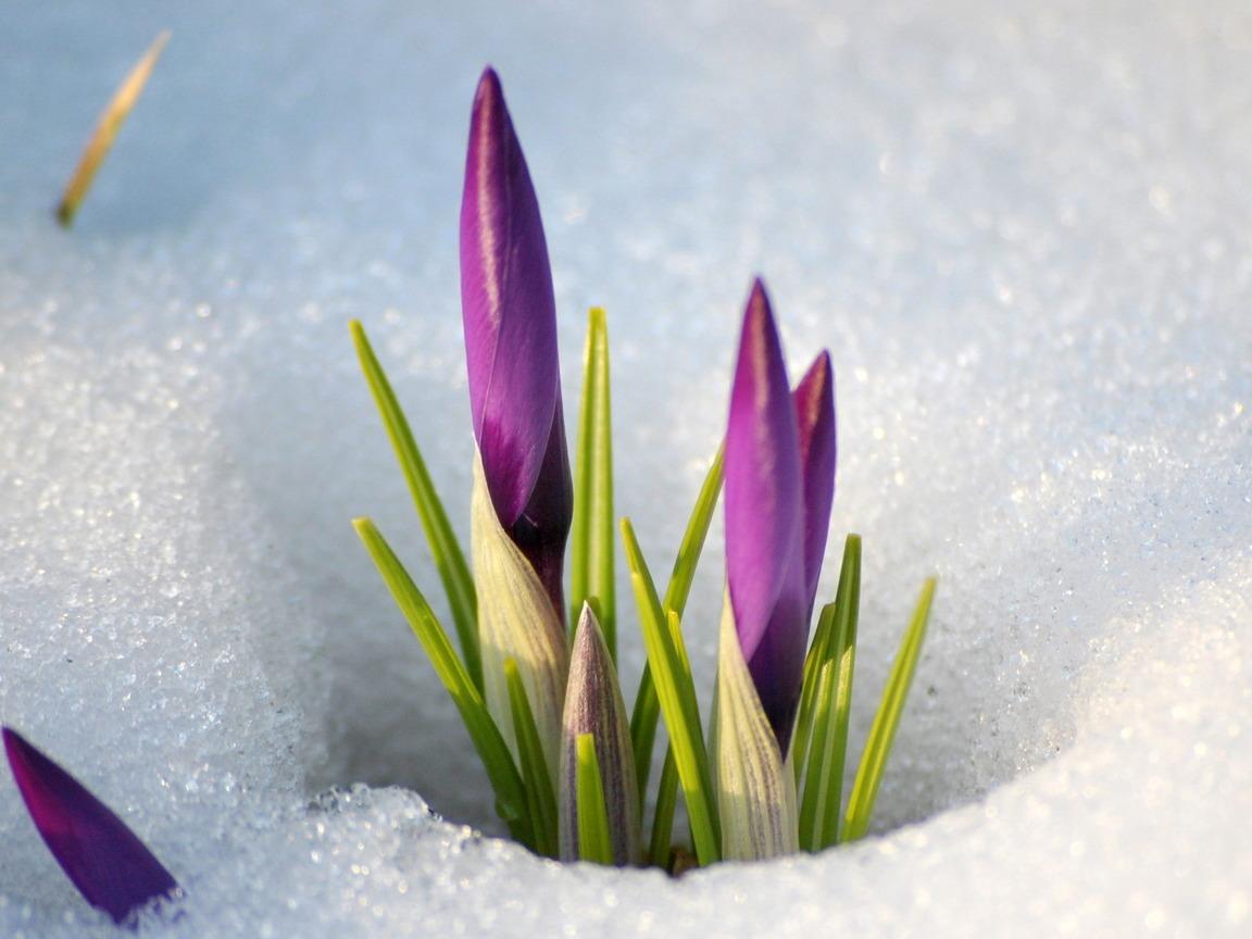 Весна 1152 x 864
