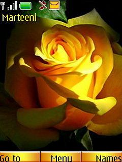 Желтые Розы (FL 1.1)
