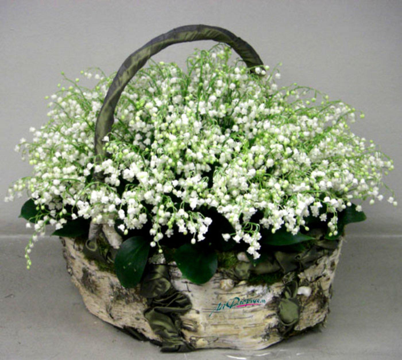 Фотоальбомы. открытка красивые ландыши в гостевую цветы весны.  Все цветы мира.