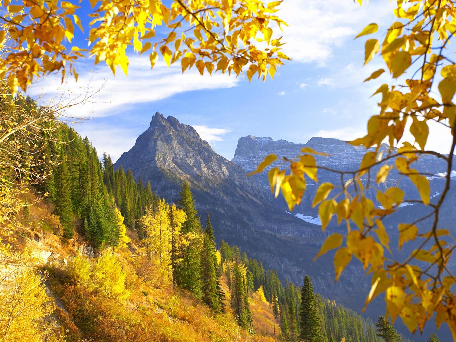 Картинки золотая осень фотообои
