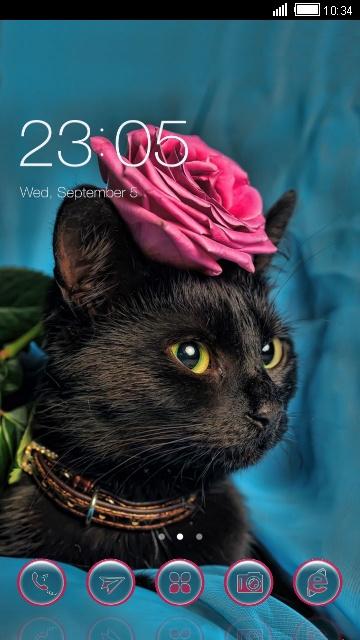 Котенька с розой