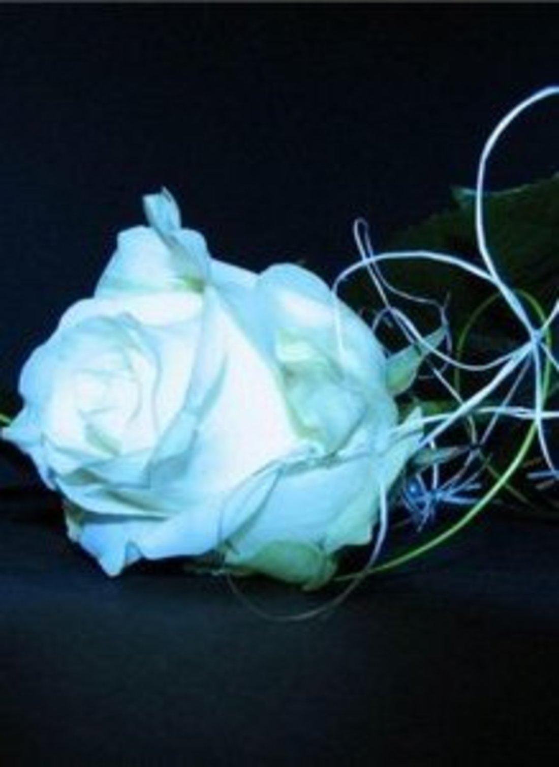 Ютуб белые розы надежды 4