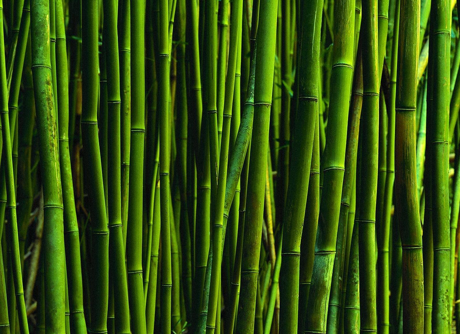 Бамбук 1596 x 1160