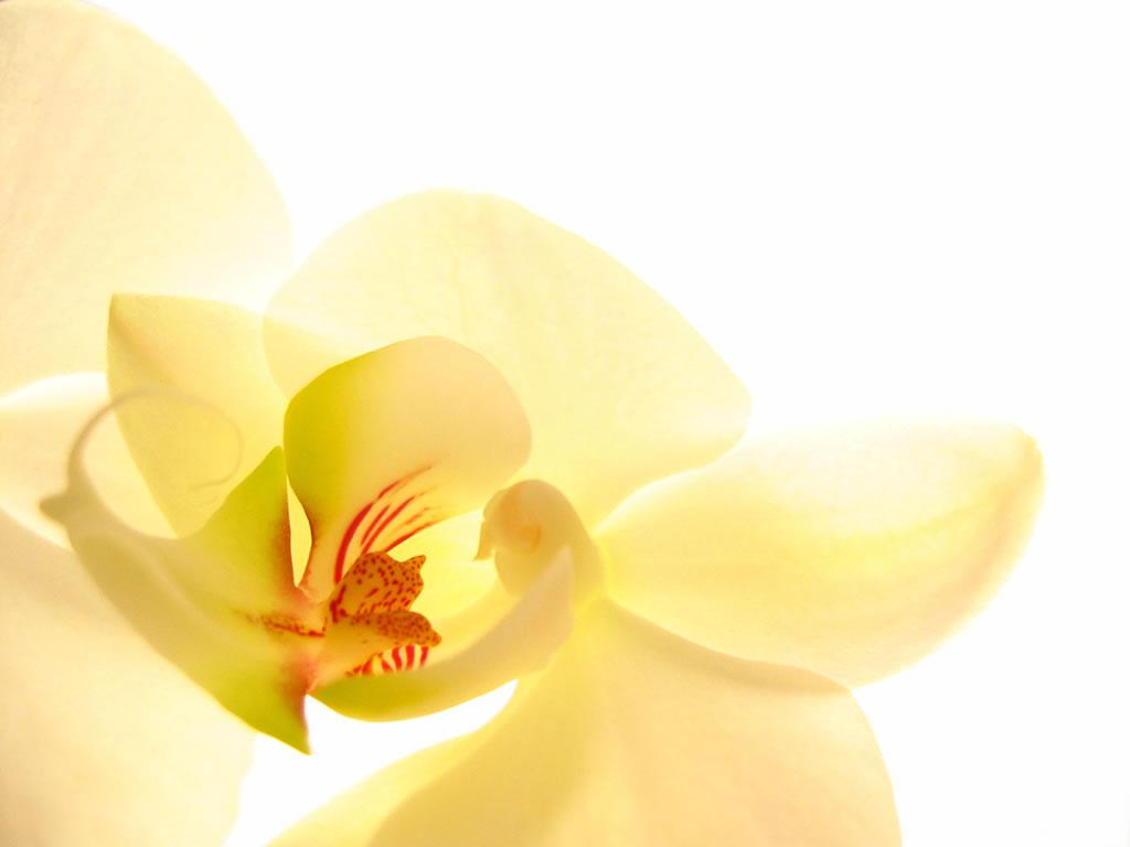 Орхидея 1024 x 768