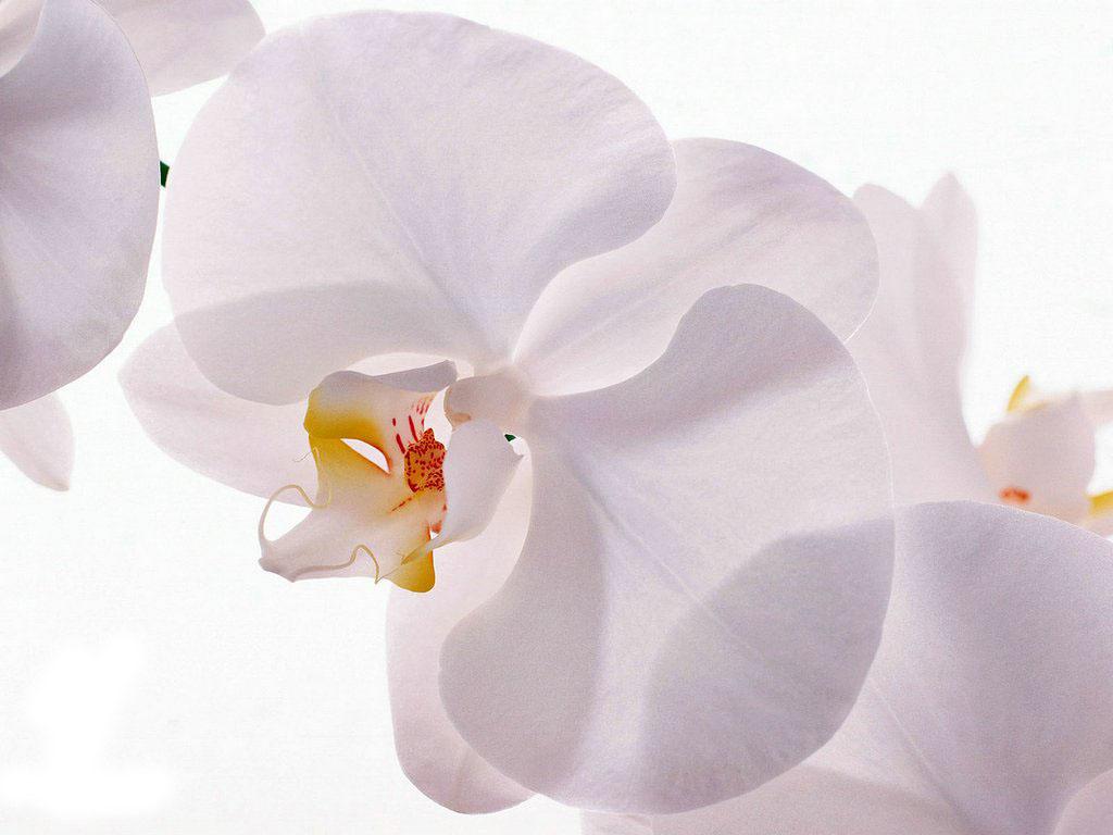 Картинки цветов архидей 3