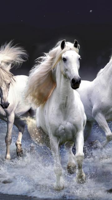 фото лошадей на заставку телефона № 20651 бесплатно