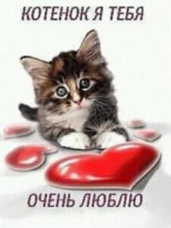 Картинки я тебя люблю котенок