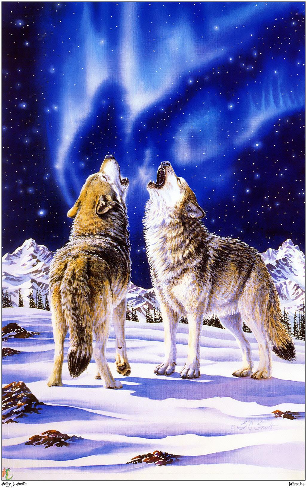 Северные волки 1027 x 1632