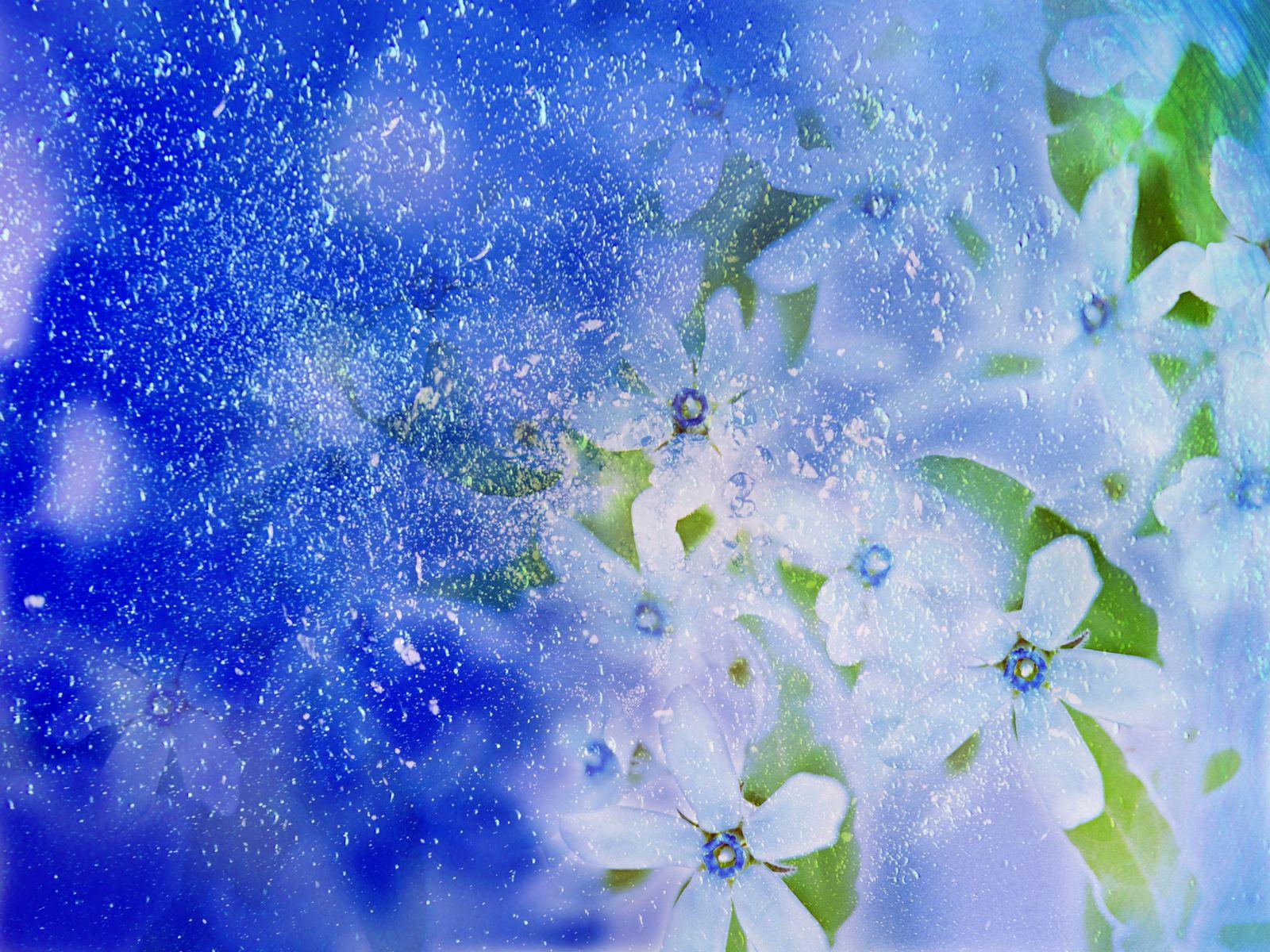 Цветы 1600 x 1200
