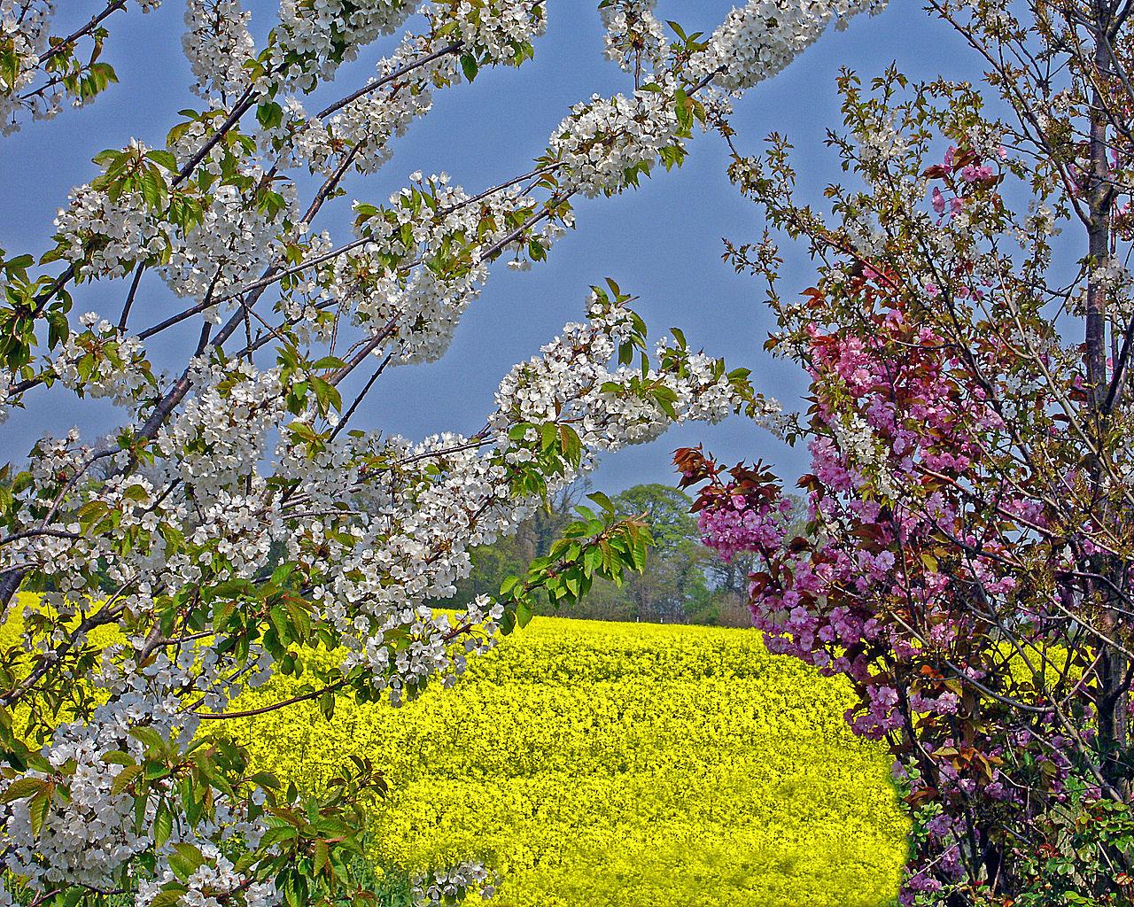 Весна 1280 x 1024