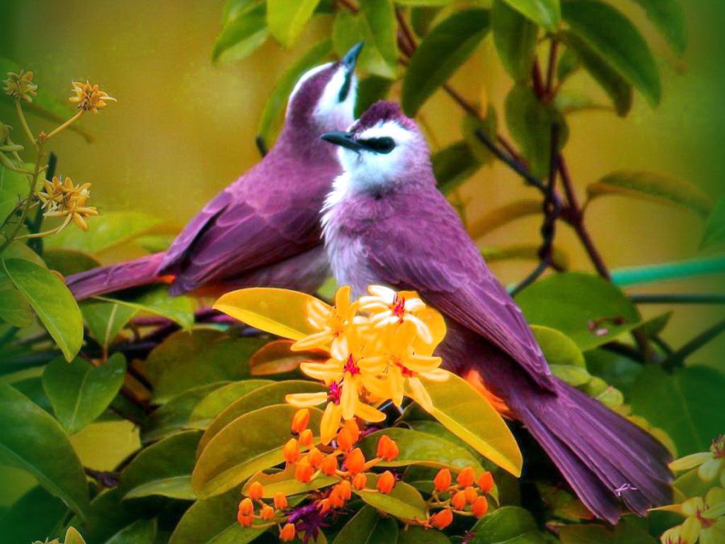 Ярко окрашенные птицы 1024 x 768