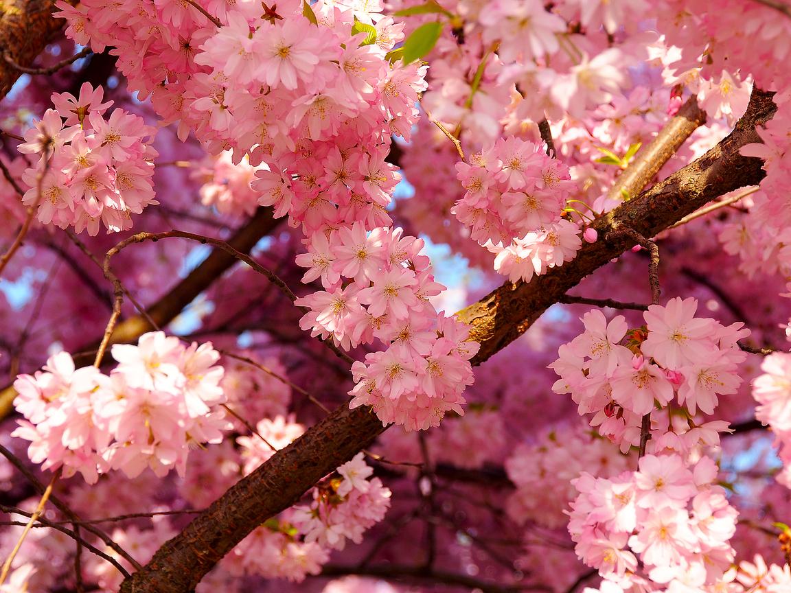 Гугл цветы картинки 7