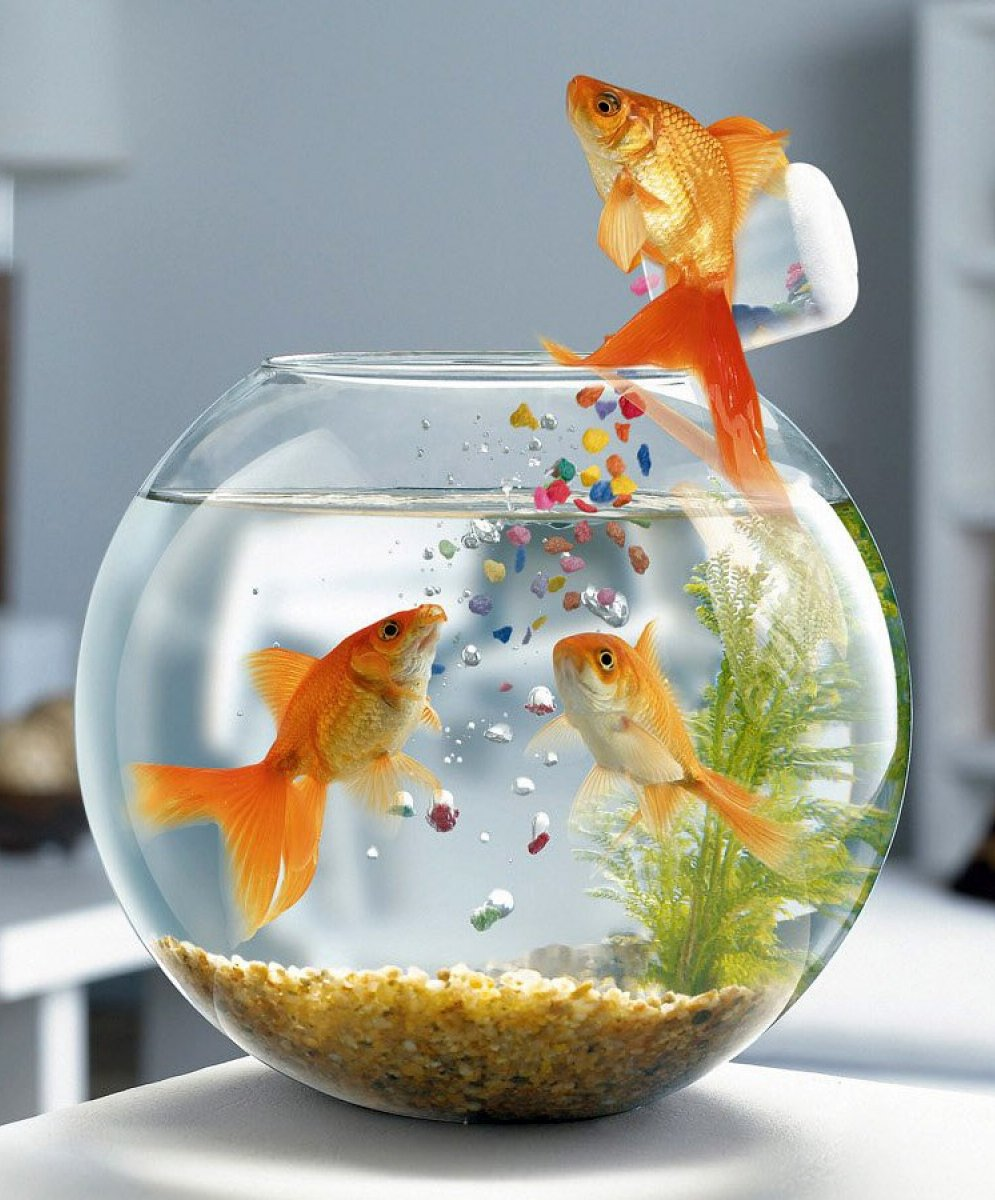 обои на стол аквариум:
