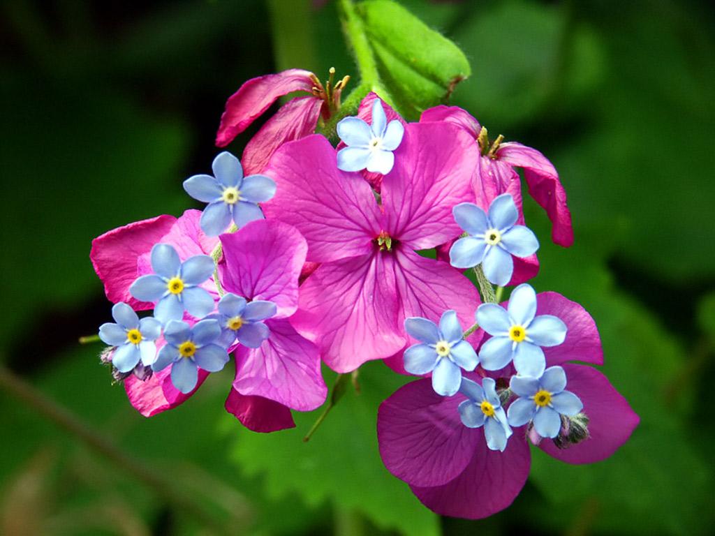 Spring blossoms весенние цветы 1024 x 768