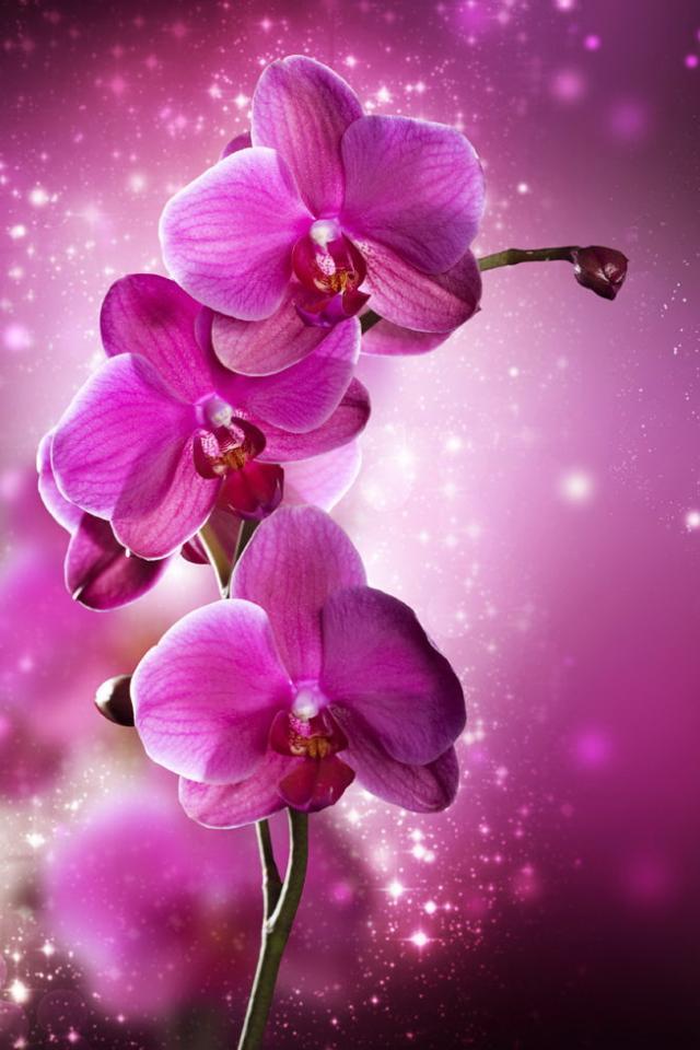 Поздравления с орхидеями открытки 63