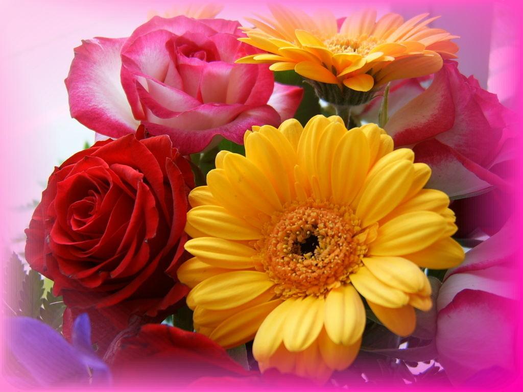 изображение цветов: