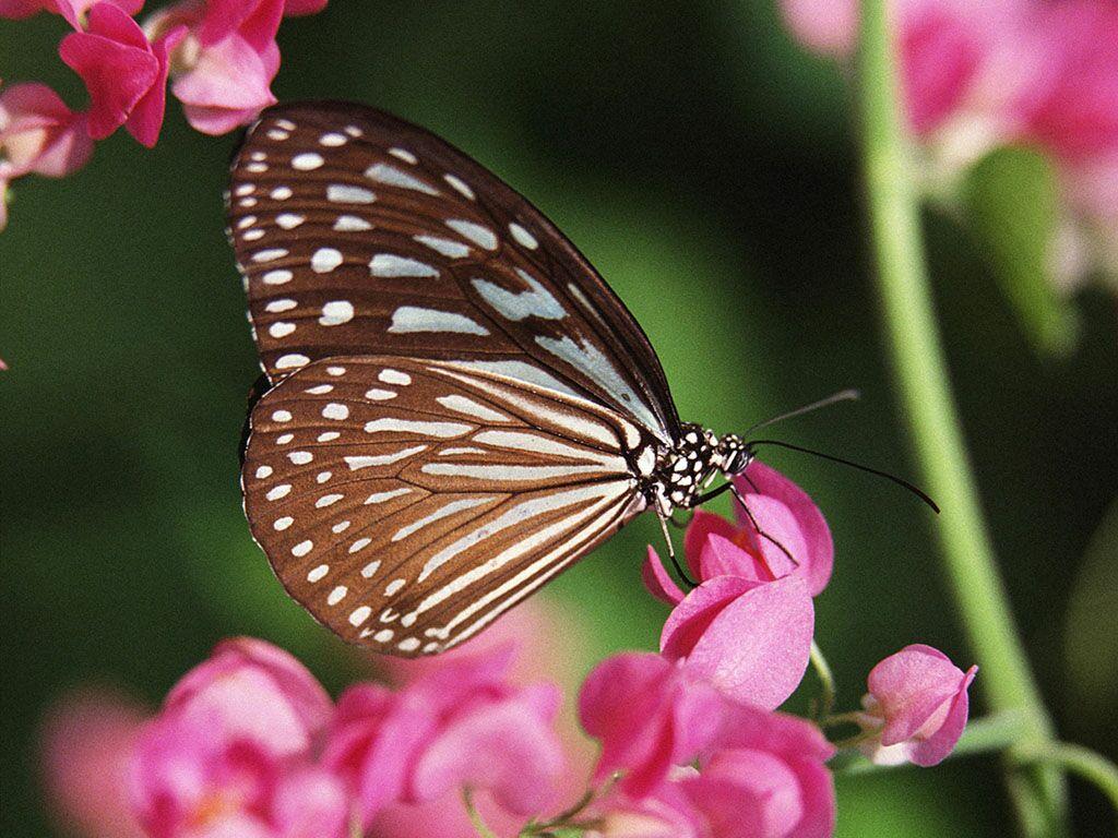Красивые картинки животных и цветов 3