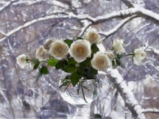 Обои букет белых роз от adelij на рабочий