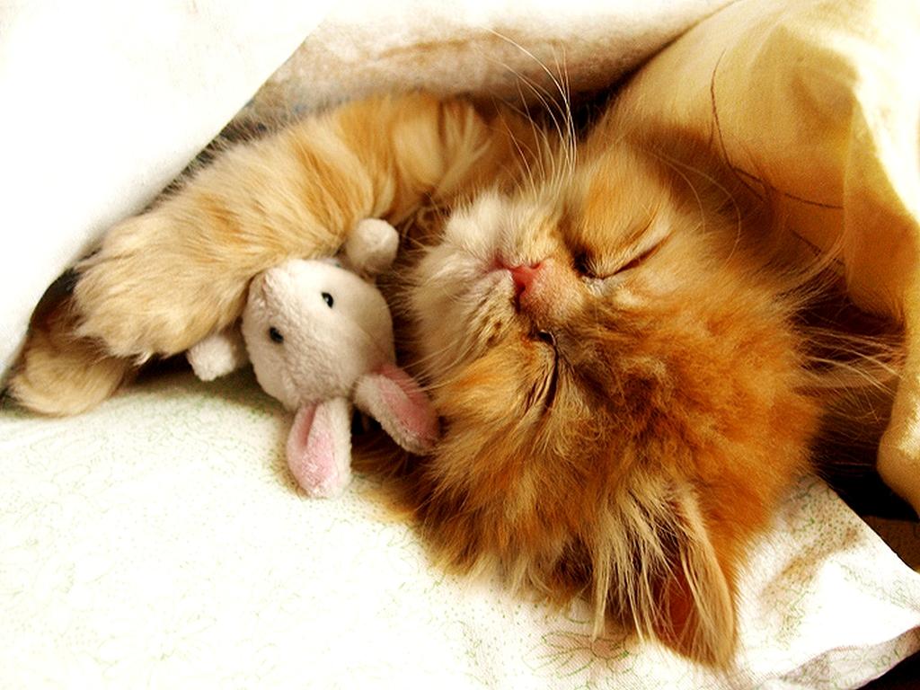 Кот и кролик 1024 x 768