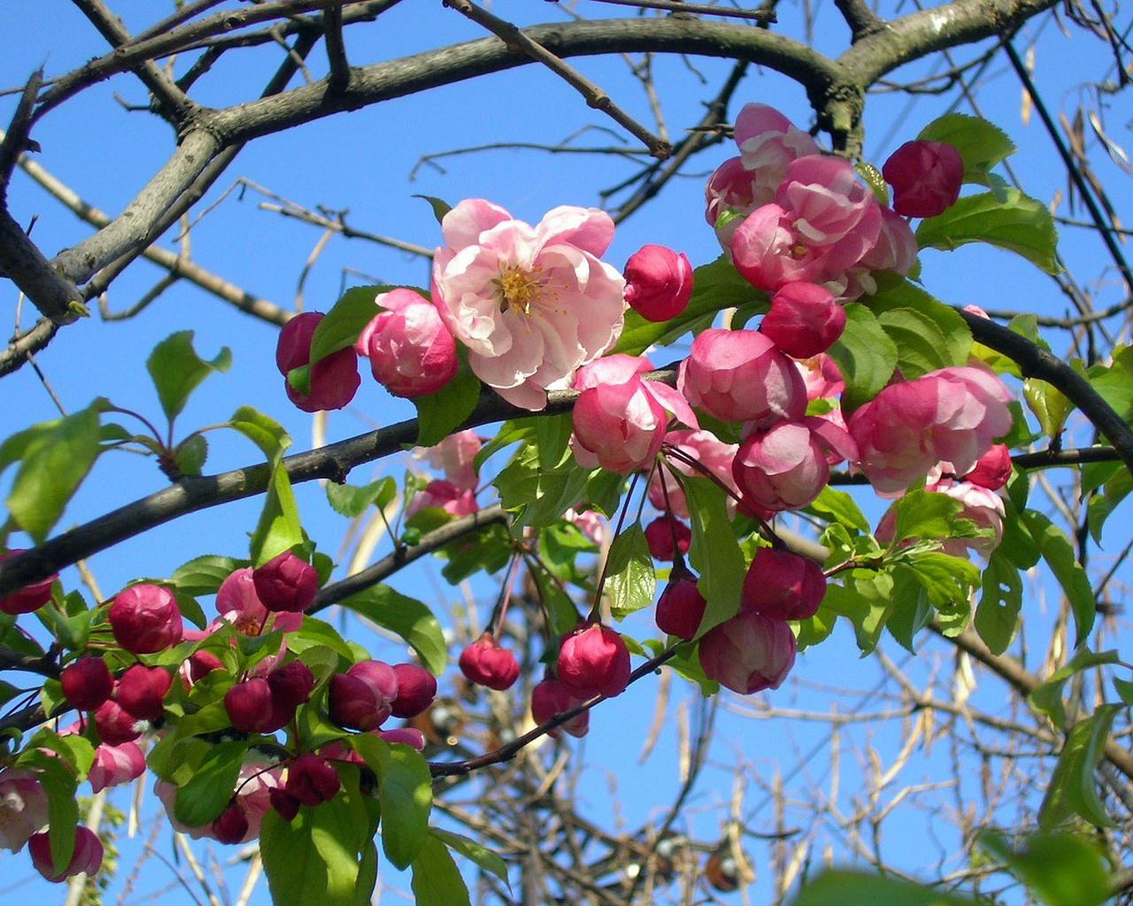 Весна обои на рабочий стол 1280x1024 №798508
