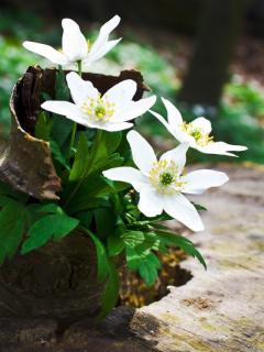 Цветы на пеньке