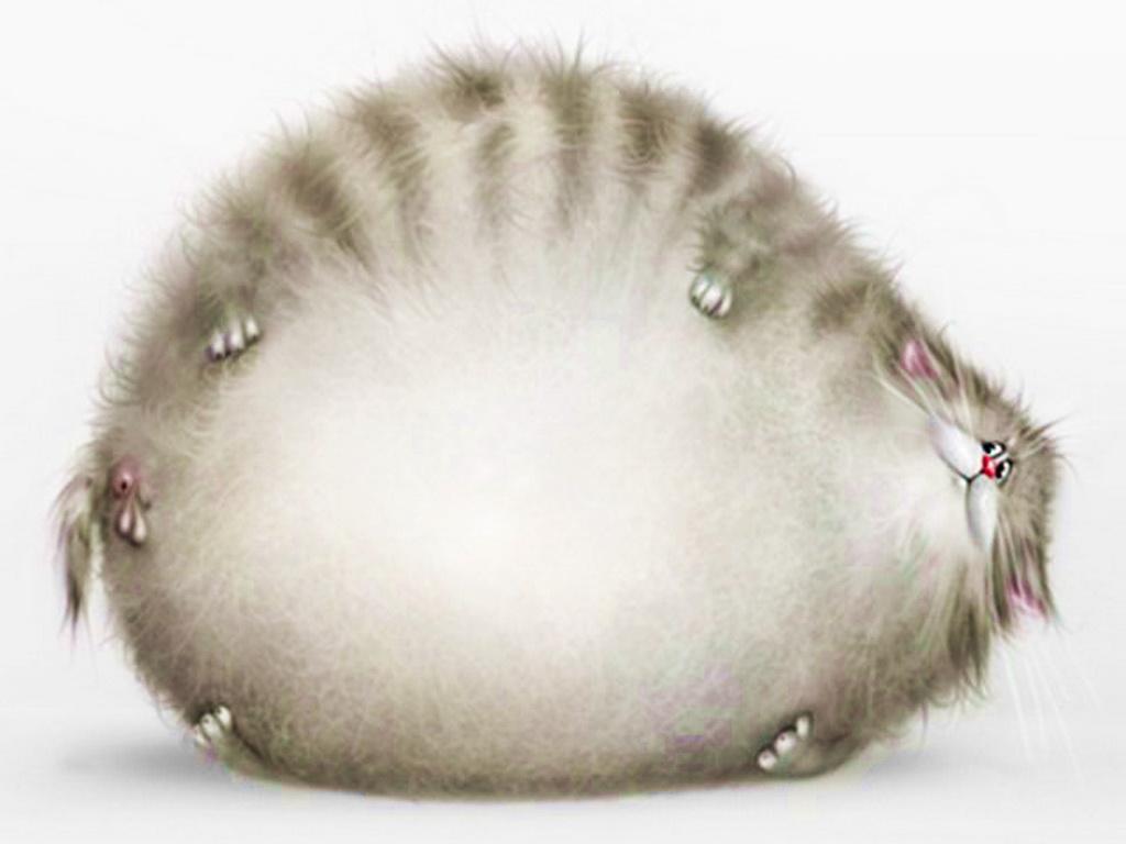 Очень толстый кот : ) - обои на рабочий ...: www.mobilmusic.ru/wallpaper.php?id=896623
