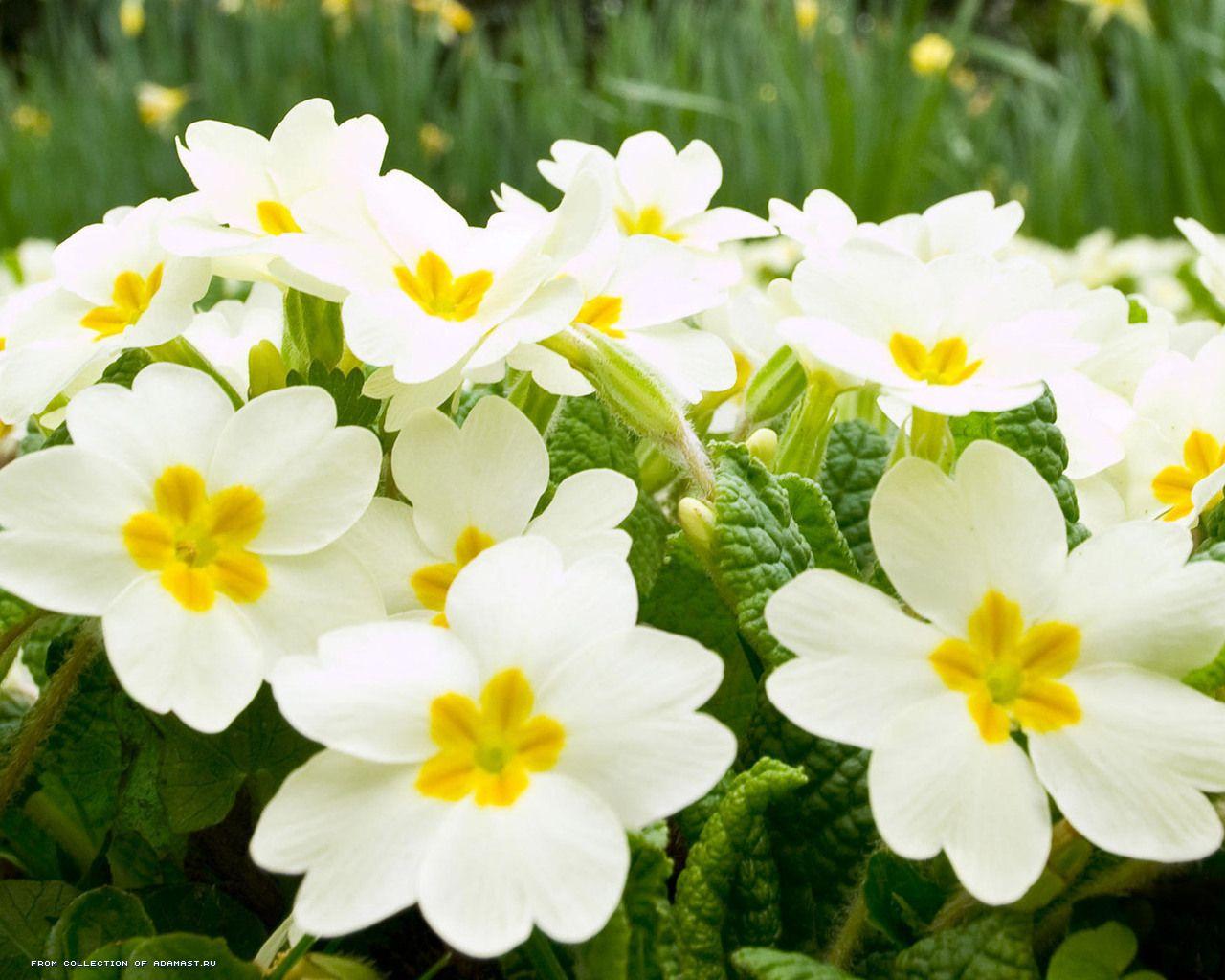 Очень красивые цветы 1280 x 1024