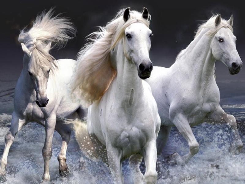 Лошади 800 x 600