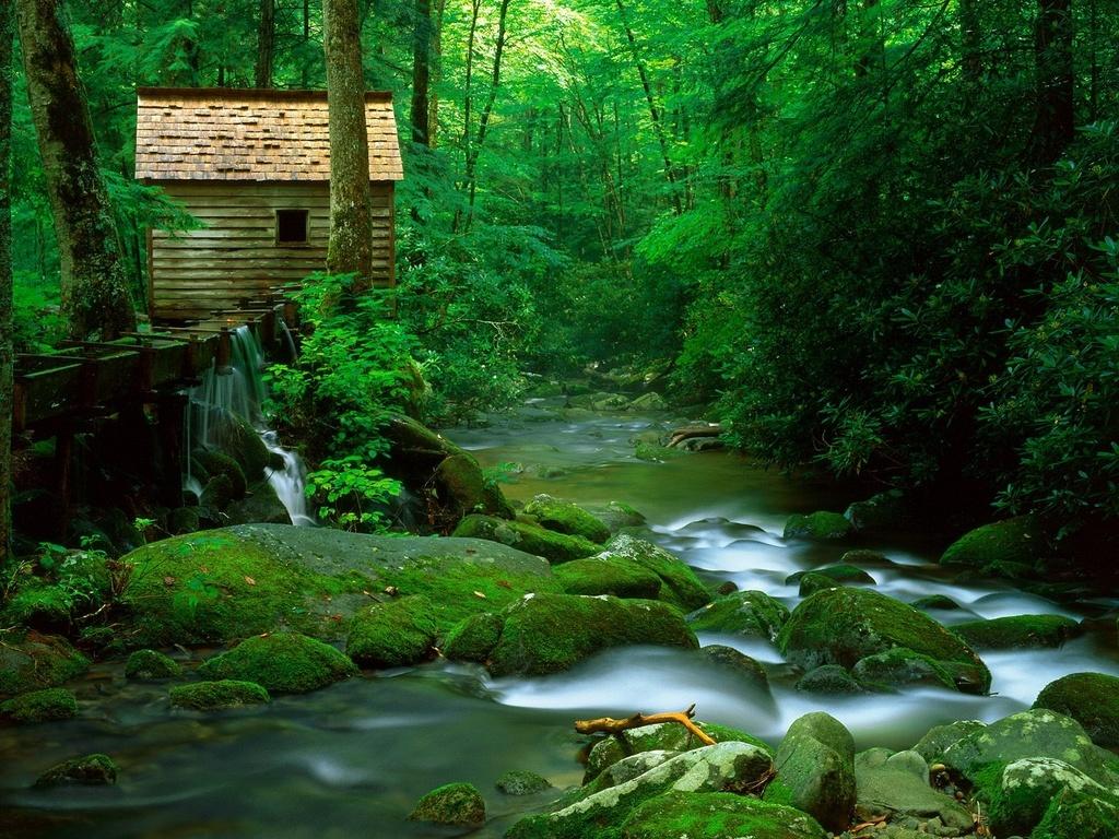 Домик в лесу 1024 x 768