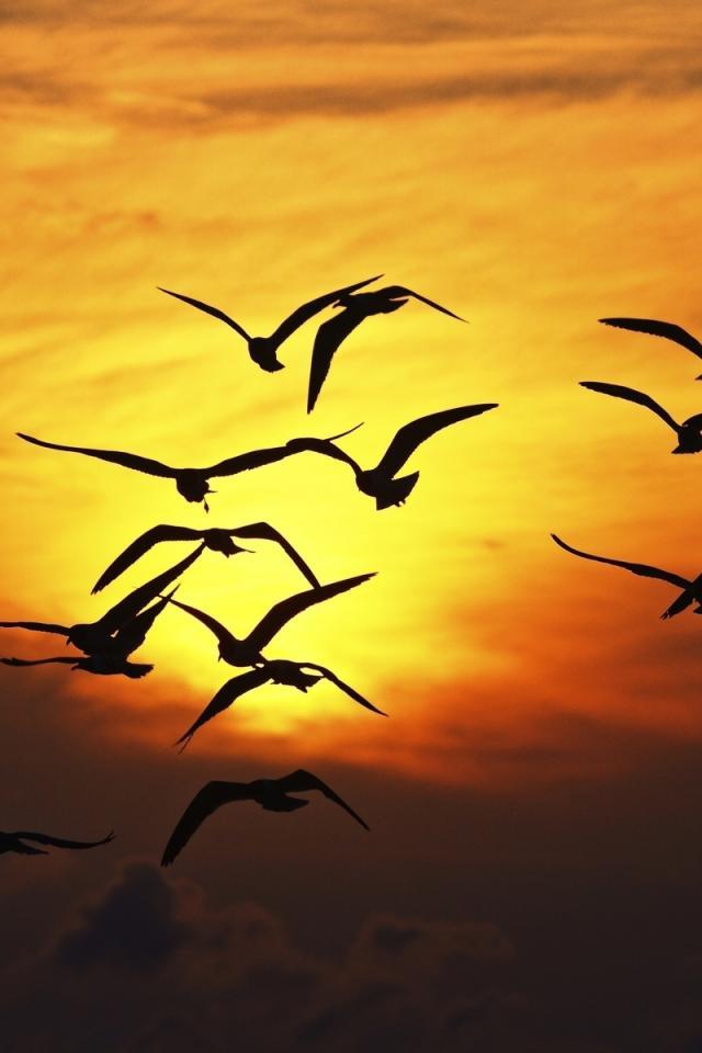 Рисунки закат с птицами