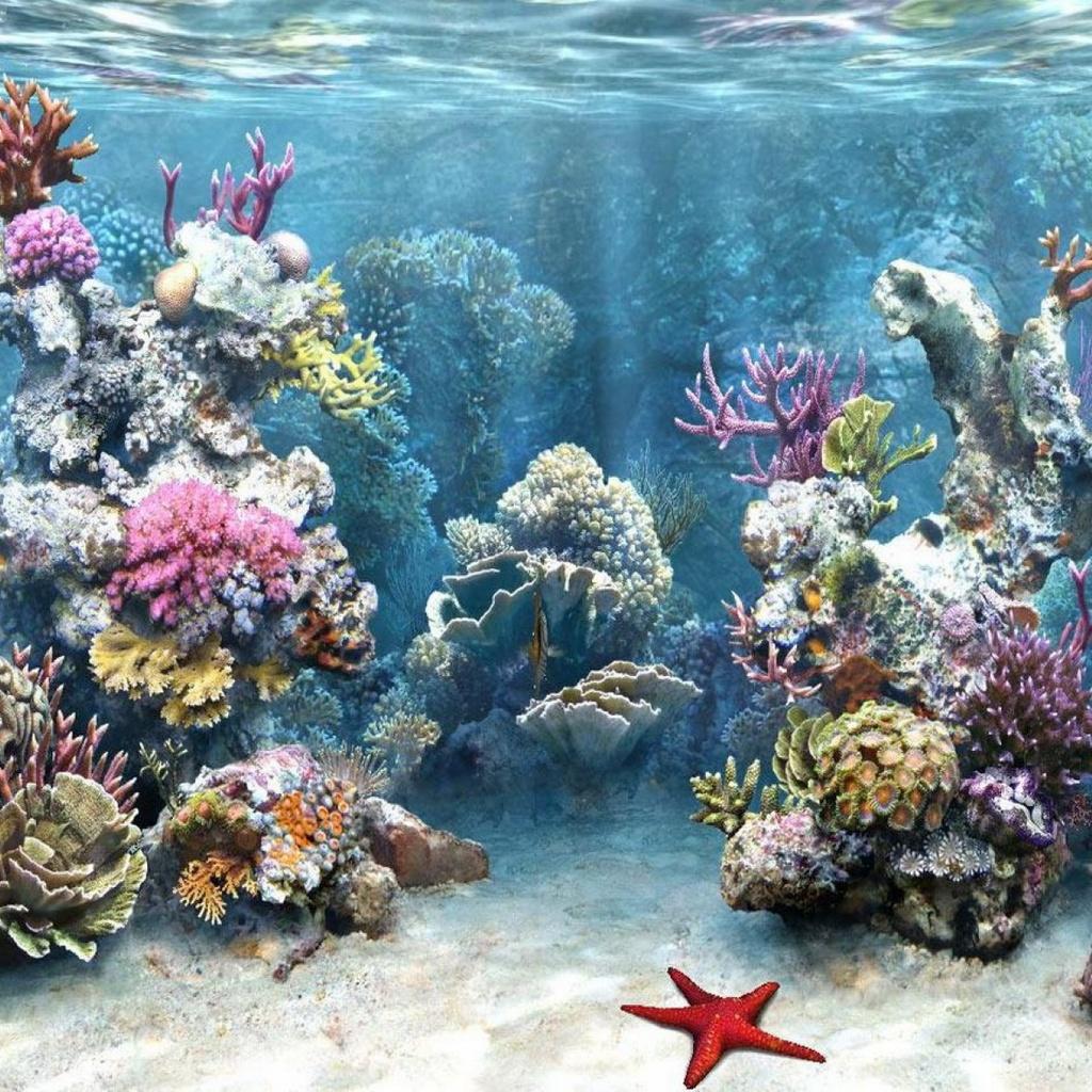 Подводный мир 1024 x 1024