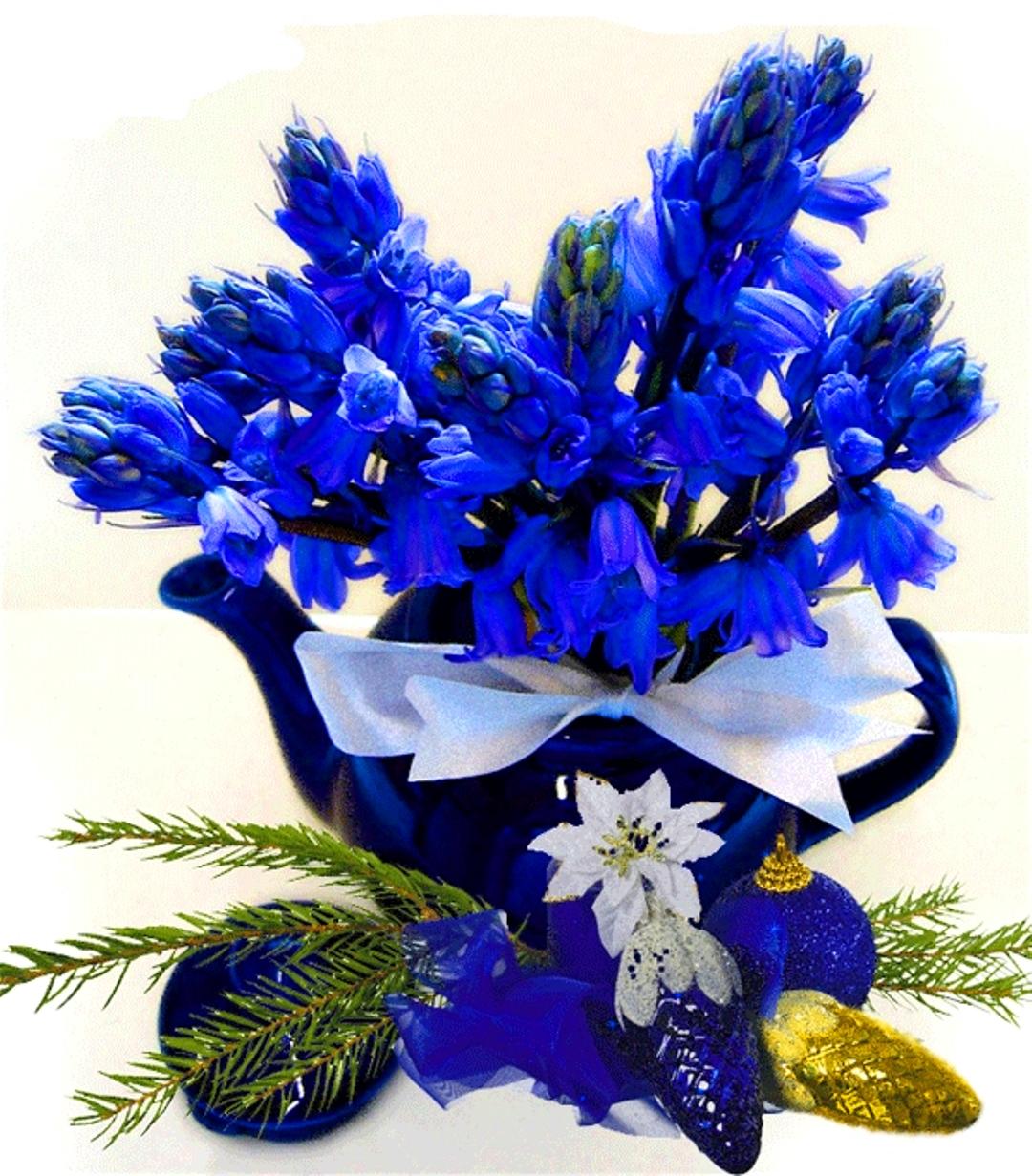 декоративные цветы для сада и фото