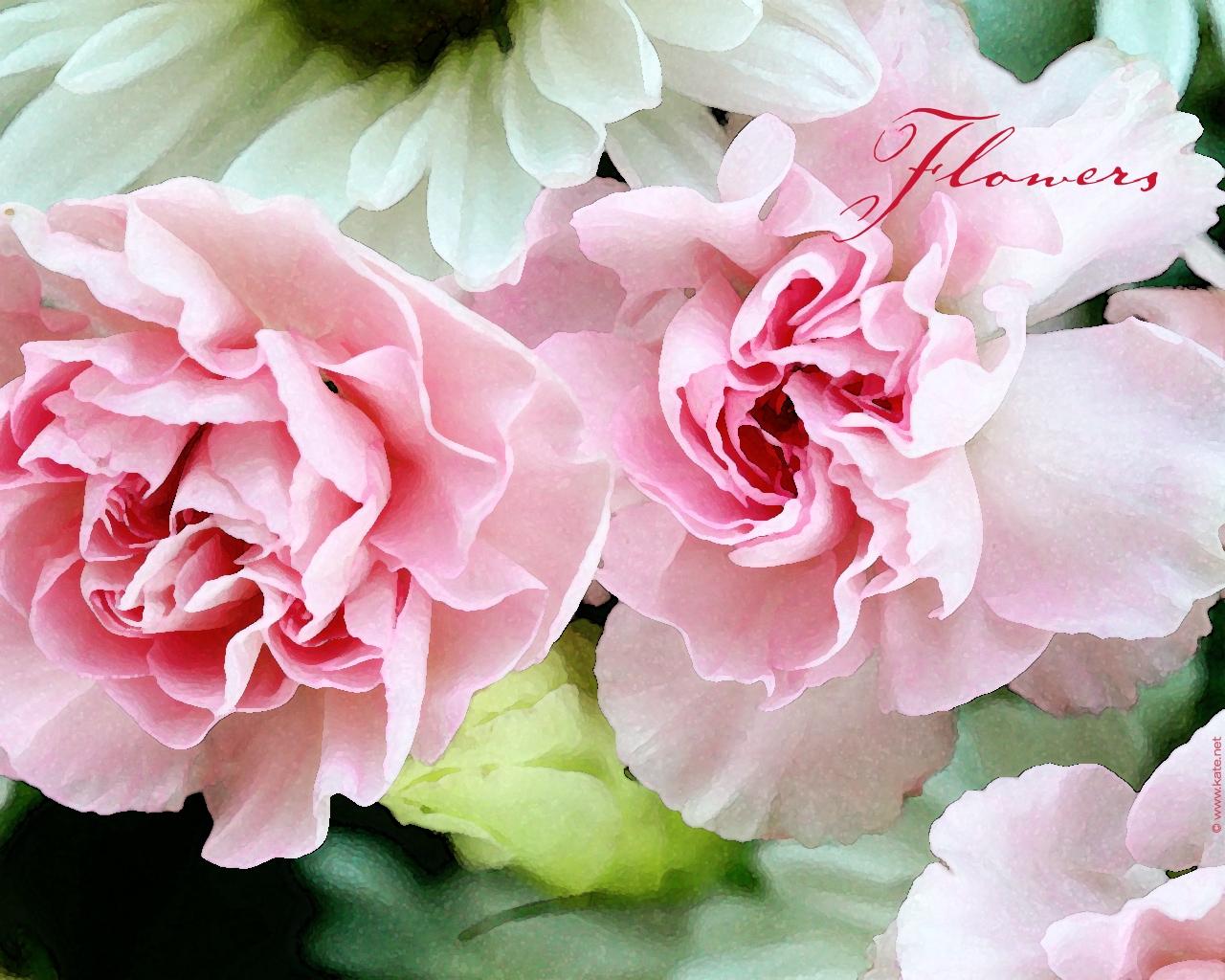 Цветы 1280 x 1024