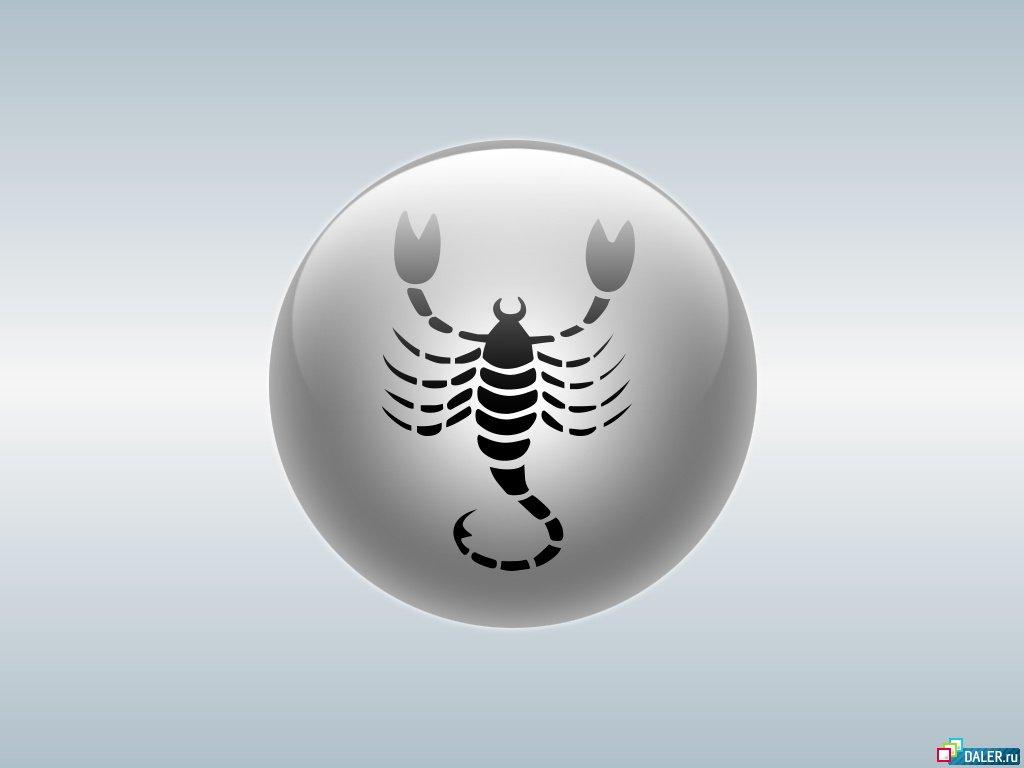 скорпиона на рабочий стол