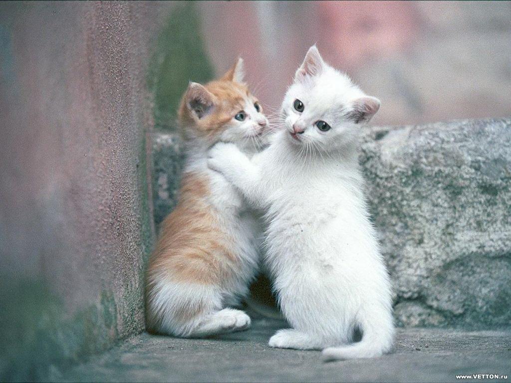 Фото котики скачать 8