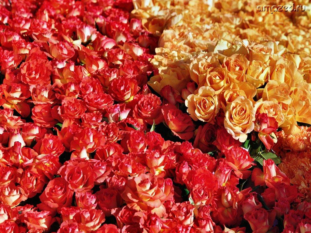 Охапка цветов картинки 7