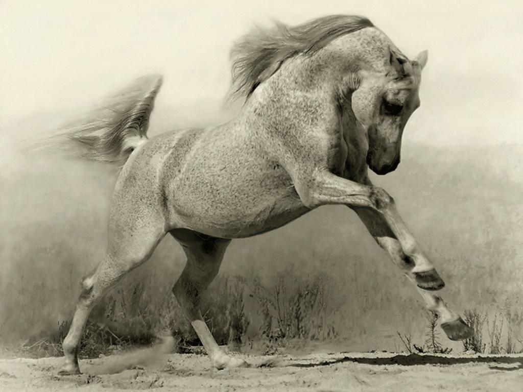 белая конь фото