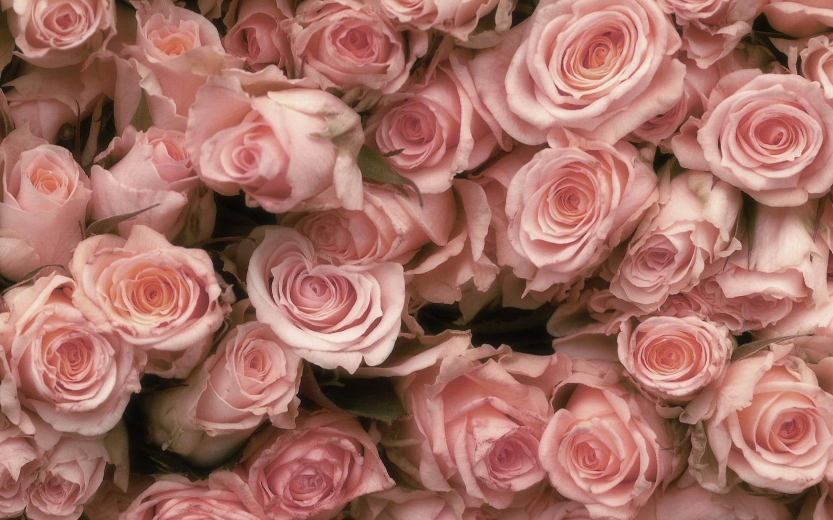 Обои розы на рабочий стол широкоформатные - c