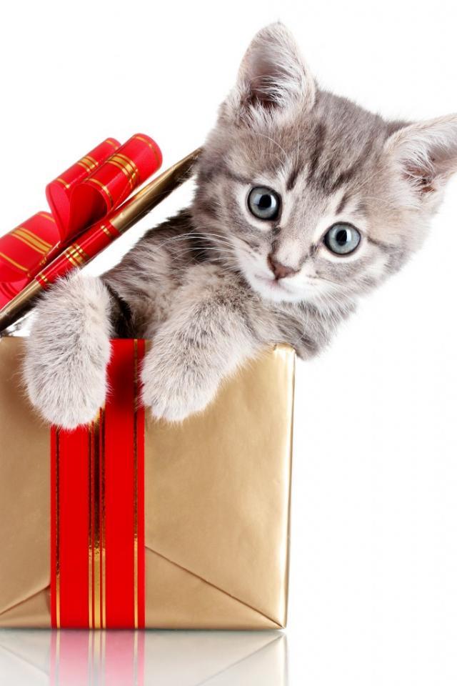 Подарки с рисунком кошка