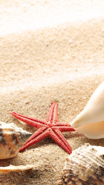 темы 308 на телефон ракушки в море нокия