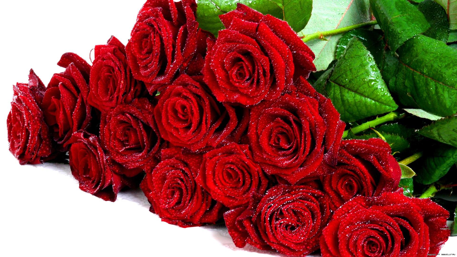Шикарный букет красных роз 1920 x 1080