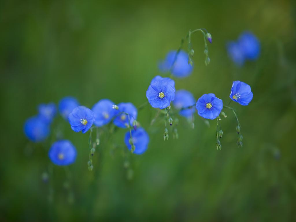 Картинки цветы на синем фоне 5