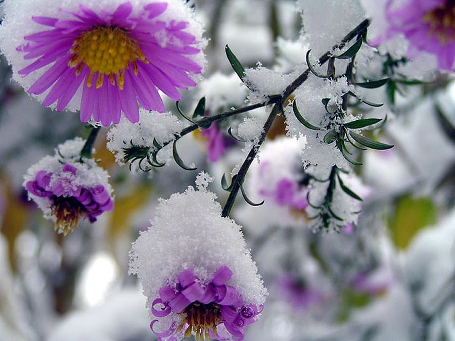 Обои первый снег