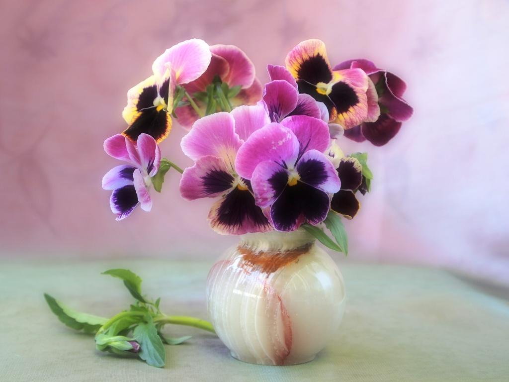 Цветы в вазе фото картинки 1