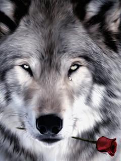Влюбленный волк