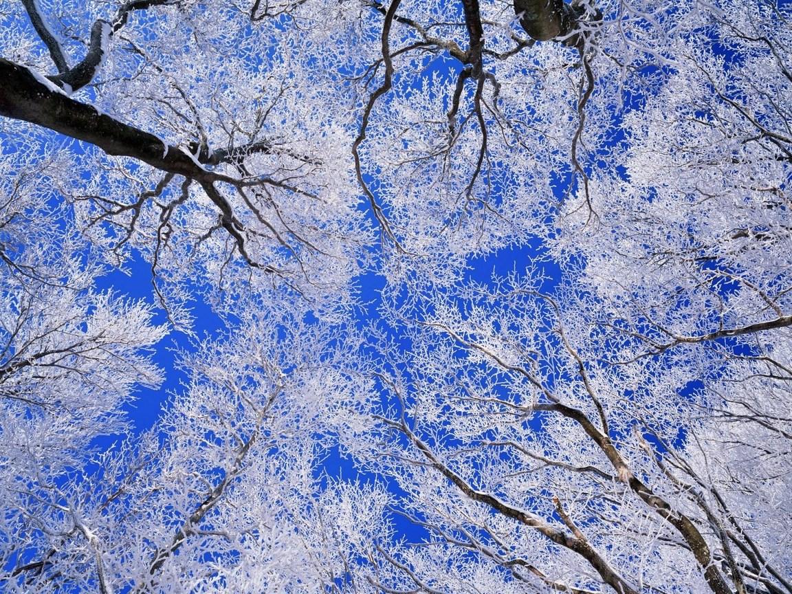 Деревья в снегу 1152 x 864