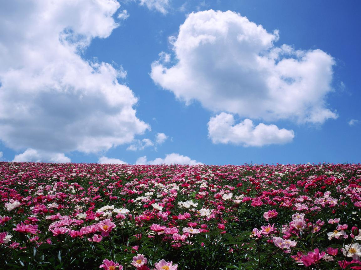 Картинки цветы красивые детские 2