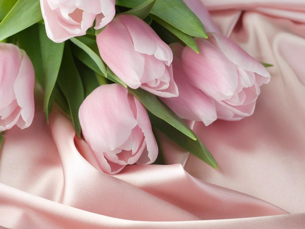 Оч красивые розы 1024 x 768