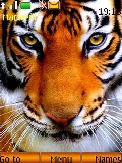 Картинки на телефон тигры