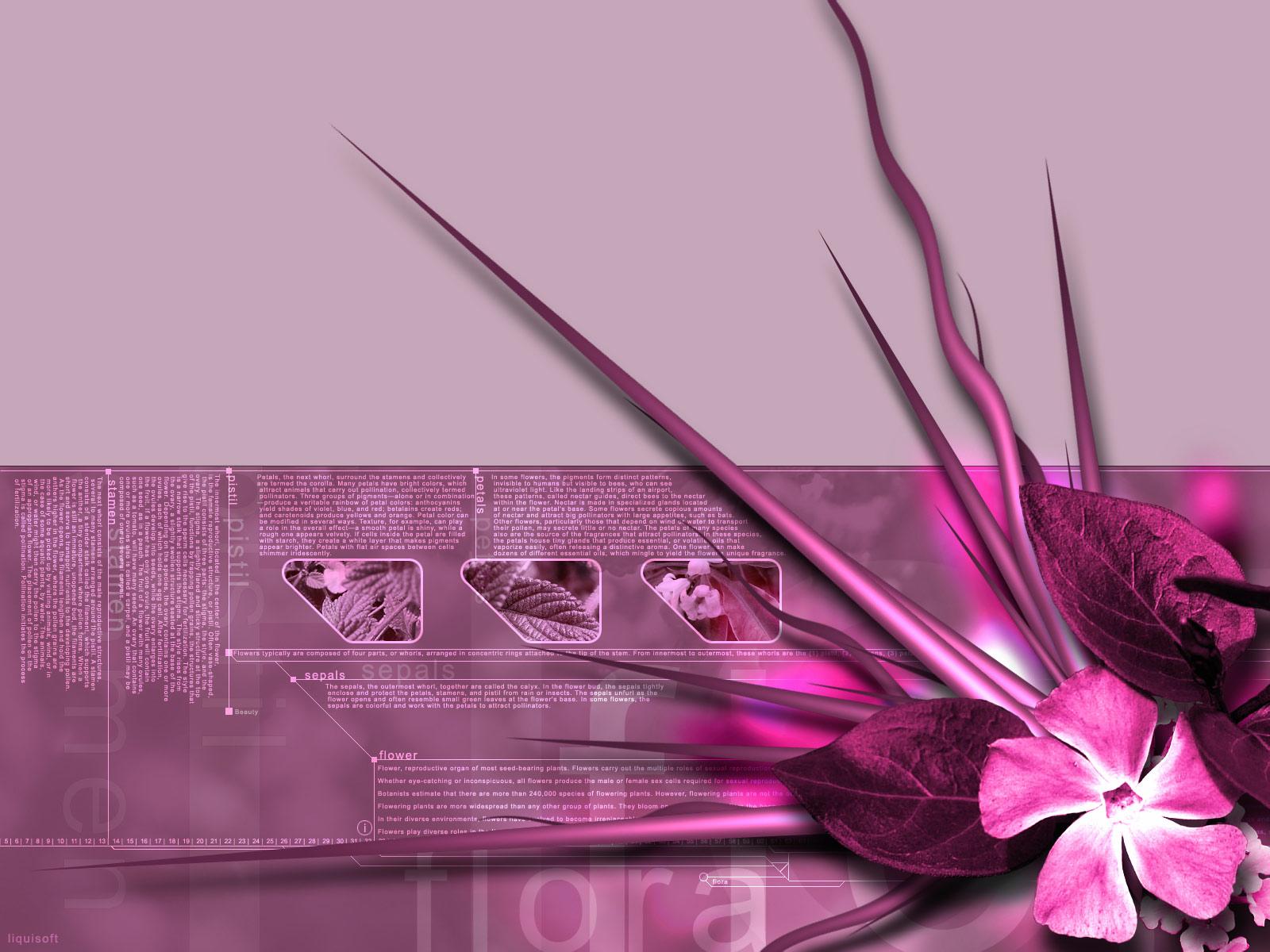 Flora pink 3d theme 1600 x 1200